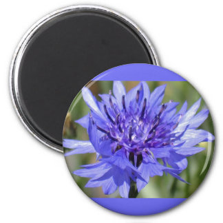 Blue Bachelor Button Flower Fridge Magnet