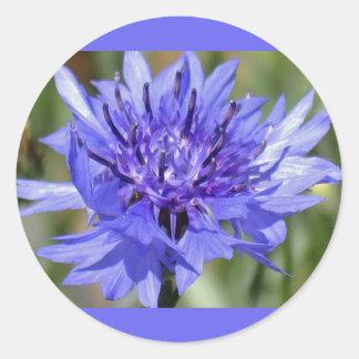 Blue Bachelor Button Flower Stickers