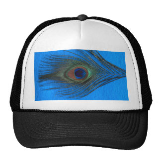 Blue Background Peacock Feather Hats