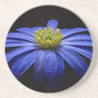 Blue Balkan Anemone flower Coaster