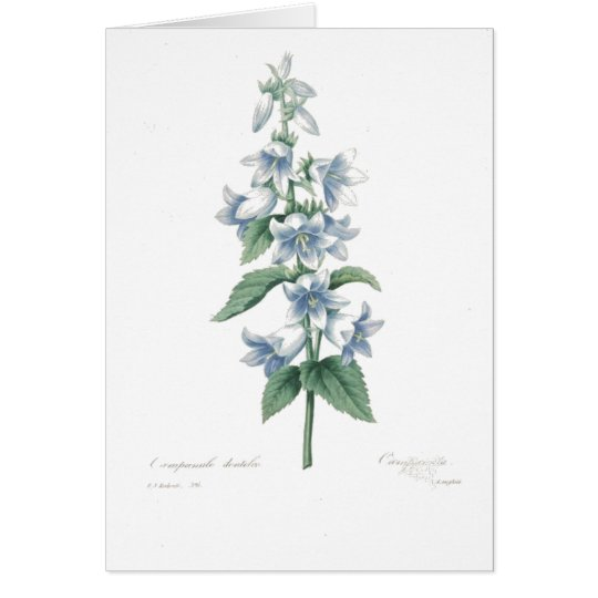 Blue Bell Floral by Redoute Card