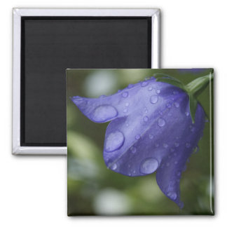 blue bell square magnet