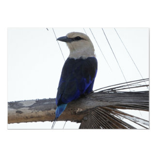 Blue-bellied Roller 13 Cm X 18 Cm Invitation Card