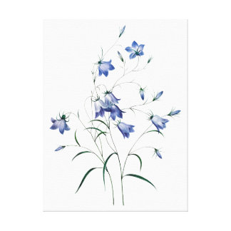Blue bells, blue flowers by Redoute Canvas Print