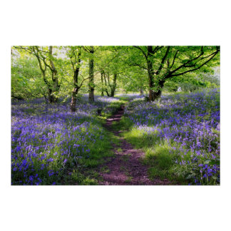 Blue bells forest Scotland Posters