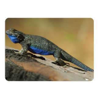 Blue Belly Scale Lizard 13 Cm X 18 Cm Invitation Card