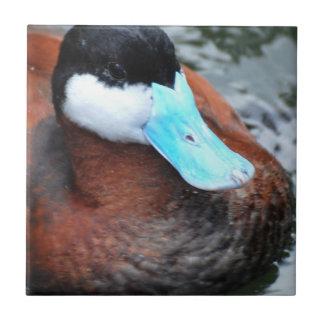 Blue Billed Duck Tile