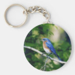 Blue bird basic round button key ring