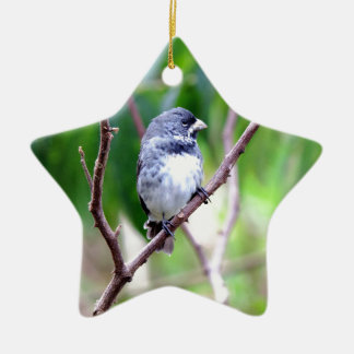 Blue Bird Ceramic Star Decoration