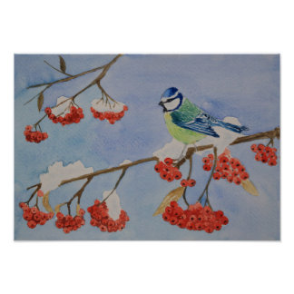 Blue bird on a rowan tree branch poster
