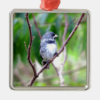Blue Bird Silver-Colored Square Decoration