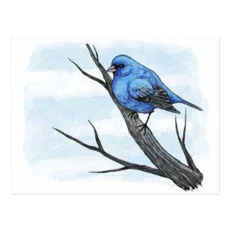 Blue Bird Sketch Postcard