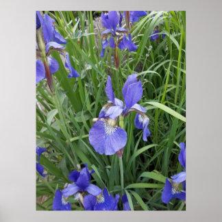 Blue, blue, iris poster