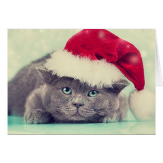 Blue British Cat Purr-fect Holiday Season Card