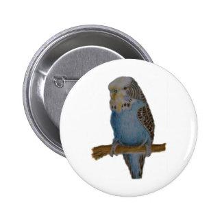 Blue budgie art button