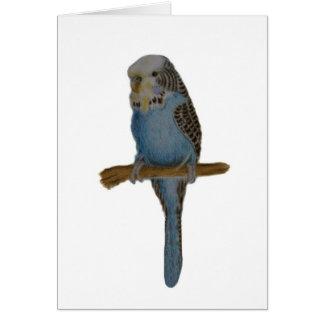 Blue Budgie Art Card