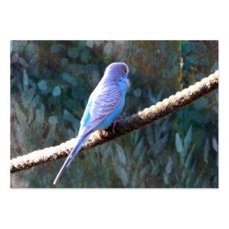 Blue Budgie Bird Business Card Template