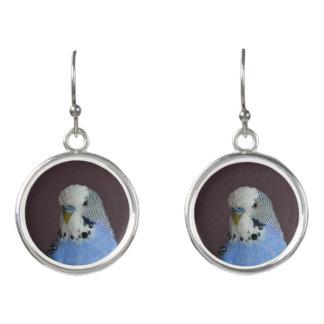Blue Budgie Bird Parrot Earrings