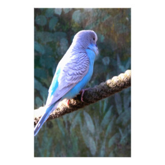 Blue Budgie Flyer