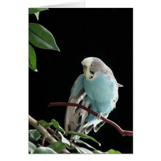 Blue Budgie Greeting Card,  Parakeet Greeting Card