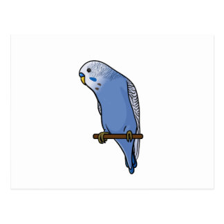 Blue Budgie Postcard