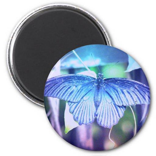 Blue Butterfly Magnet Fridge Magnet