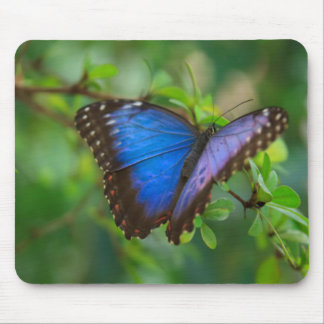 Blue Butterfly Mouse Mat