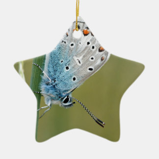 Blue Butterfly on Plant Christmas Ornament