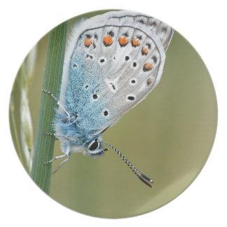 Blue Butterfly on Plant Party Plates