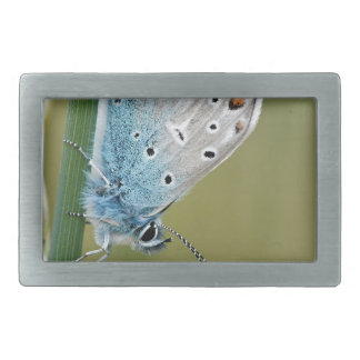 Blue Butterfly on Plant Rectangular Belt Buckle