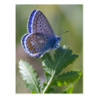 blue butterfly postcard