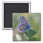 blue butterfly refrigerator magnet