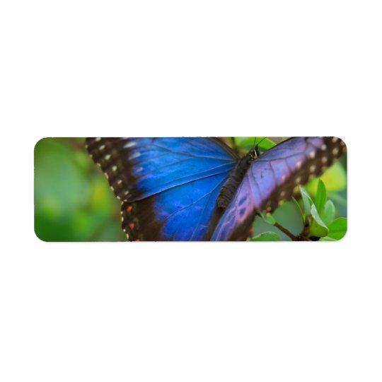 Blue Butterfly Return Address Label