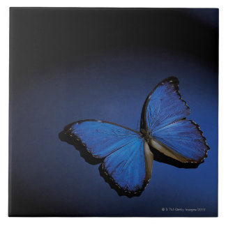Blue butterfly large square tile