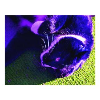 blue cat on side pop art feline animal image custom flyer