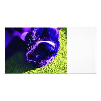 blue cat on side pop art feline animal image photo card template