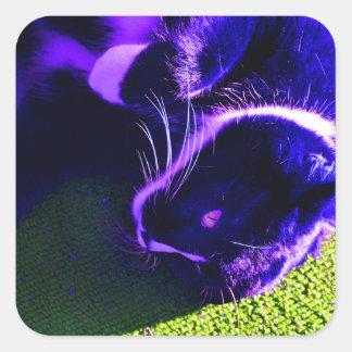 blue cat on side pop art feline animal image square sticker
