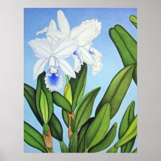 Blue Cattleya Orchids Poster