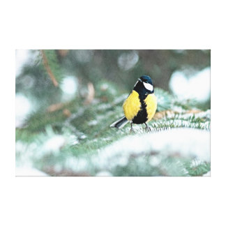 Blue Chickadee On Green Spruce Tree Stretched Canvas Print