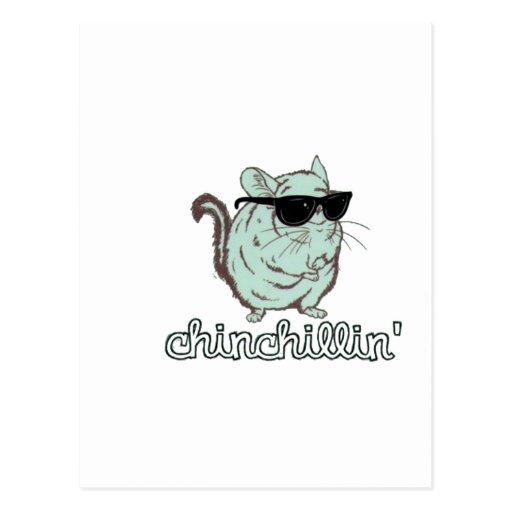 Blue Chinchillin Chinchilla Postcards