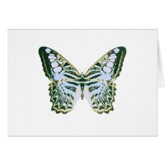 Blue Clipper Butterfly Cards