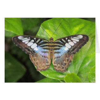 Blue Clipper Butterfly Notecard Note Card