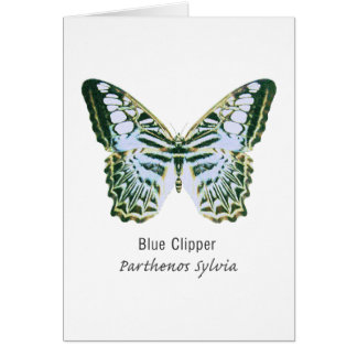 Blue Clipper with Name Greeting Card