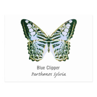 Blue Clipper with Name Postcard