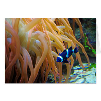 Blue Clownfish Card