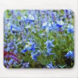 Blue Columbines - Flowers