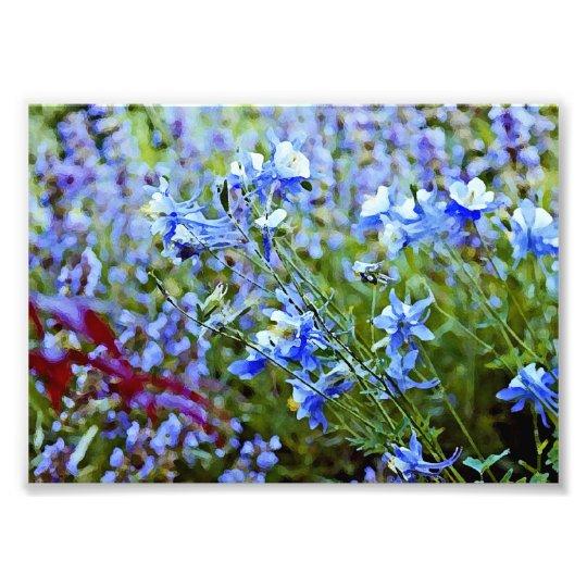 Blue Columbines - Flowers Photo Print