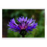 Blue Cornflower Flower Blossoms Peace Love Destiny Greeting Cards