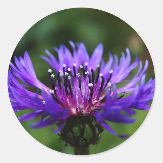 Blue Cornflower Flower Blossoms Peace Love Destiny Stickers