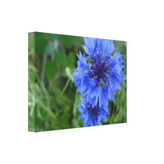 Blue Cornflower Gallery Wrap Canvas